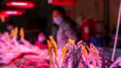 Китай съобщи за първи случай в света на птичи грип H10N3, поразил човек