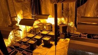 Разбиха модерната наркооранжерия на 27-годишен