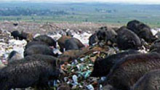 До 5 000 лв. глоба за нерегламентирано сметище в Пловдив