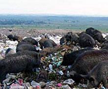 Съветниците от БСП в Пловдив против софийския боклук