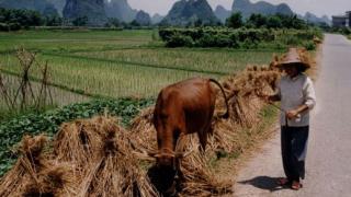 Безсмъртна ли е китайската икономика?