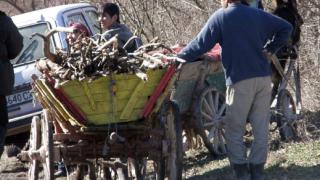 Дирекция по горите нямат сигнал за незаконна сеч в община Приморско