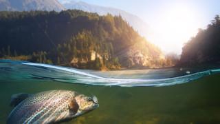 Едва 40% от водите в Европа се считат за здрави