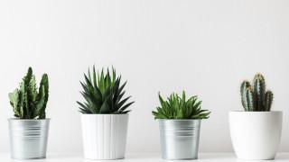 Защо да си направим градина от сукуленти