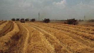 Цената на пшеницата се понижава