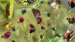 Излъчването от мобилните телефони вероятно убива насекомите