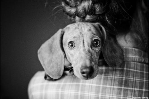 Снимка на дакел взе първа награда във фотоконкурс за домашни любимци
