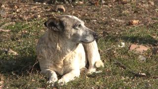 Глутница кучета нахапа пенсионер пред общината в Хасково