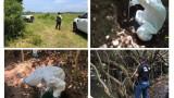 В Мексико откриха масов гроб с останките на повече от 160 души