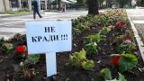 Издирват кандидат-кмет за кражба на рози