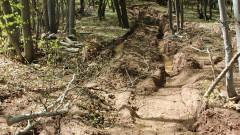 Не установиха незаконна сеч в Сандански