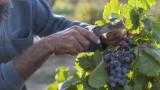 Коронавирус: Гърция затяга правилата за чуждестранните сезонни работници