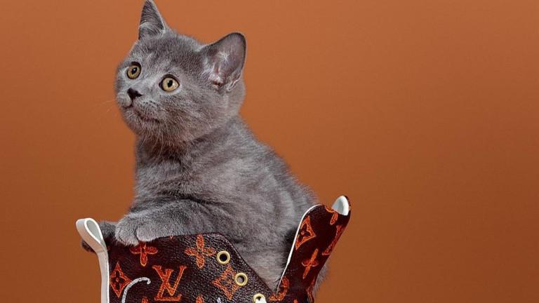 Когато котките превземат Louis Vuitton