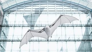 Flying Fox - прилепът, който учи, докато лети