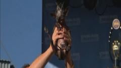 Сляпо чихуахуа е най-грозното куче в света