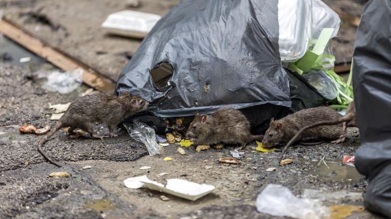 Парижки кмет представи интерактивна карта на плъховете за борба с нашествието на гризачи