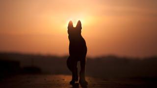 """""""Четири лапи"""" отчитат повече насилие над животни в предновогодишните празници"""