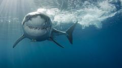 С какво се друсат акулите