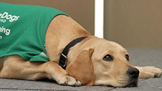 СО даде 100 хил. лв. за обучение на кучета-водачи