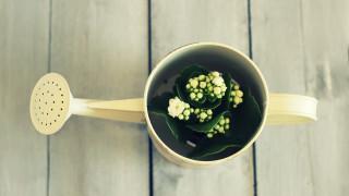 Как да не убием растенията си, докато сме на почивка