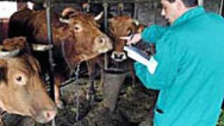 Млекопрозводители в Добрич затварят фермите си