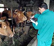 Санкции срещу некоректните изкупвачи на мляко