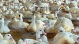 Птицевъди от Хасково излязоха на протест срещу БАБХ