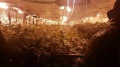 Намериха високотехнологична оранжерия за марихуана