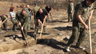 Засадиха 6 500 дръвчета в Стара Кресна