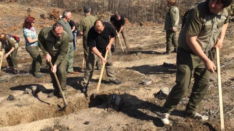 Започна залесяването на изгорелите гори над Кресна. На мястото на