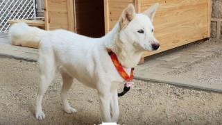 Ким Чен Ун подари на Мун Чже Ин две ловни кучета