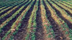 92 хил. сделки със земеделска земя сключени през 2006 г.