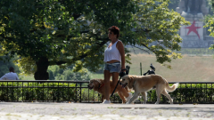 В София глобиха петима, непочистили след кучетата си в парка