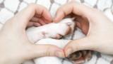 Евтаназия на домашния любимец - едно от най-трудните решения
