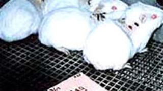 Японски учени трансформираха стволови клетки в яйцеклетки
