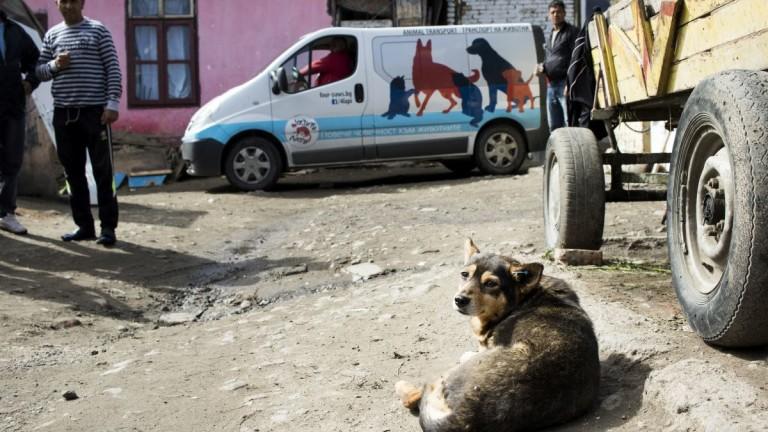 Жители на радомирско село се притесняват от приют за кучета