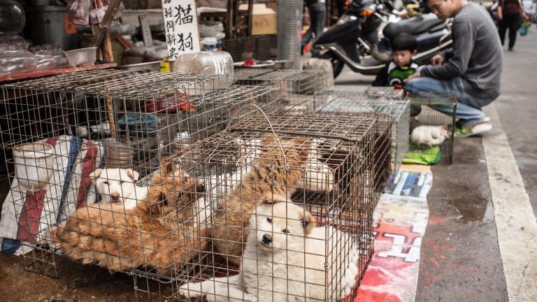 Китайският град, който забрани да се ядат кучета и котки