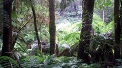 Австралийските власти се отказаха идеята за изсичане на тропически гори