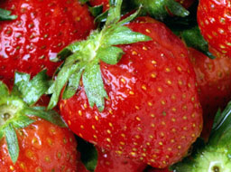 Търсят 350 жени за бране на ягоди в Испания
