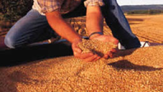 Зърно от държавния резерв отива за износ