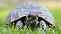 """Задържаха защитени костенурки на МП """"Капитан Андреево"""""""