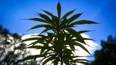 Вирджиния е първият южен щат, легализирал марихуаната
