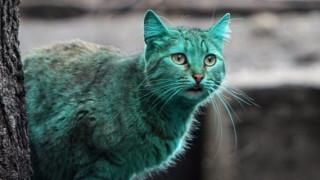 Най-известната българска котка (ВИДЕО)