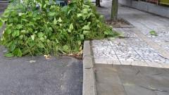 Общински съветник пита как се опазват кестените в София
