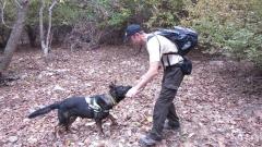 И гърци помагат да търсене на отровата в Източните Родопи