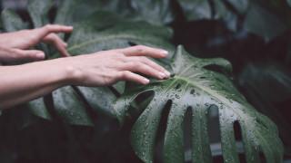 Защо не бива да пипаме растенията често