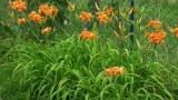 Внимавайте какво садите в градината си, какви цветя купувате и изхвърляте