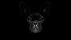 Интересни факти за кучетата от Сизър Милан