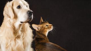 """Кучета и котки в кампания """"за"""" и """"против"""" Брекзит"""