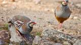 Биоразнообразието в Европа е застрашено, необходими са действия